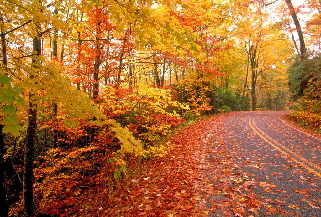 Fall Can Make For Dangerous Driving Conditions - Goldstein ...